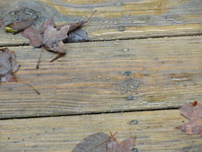 deck board protected from water with leaves and water droplets