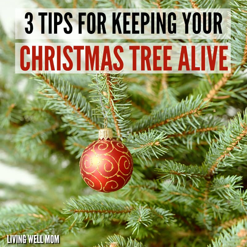 How To Keep Your Christmas Tree Alive 3 Simple Tips