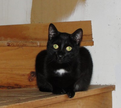 black cat sitting on wooden stairs