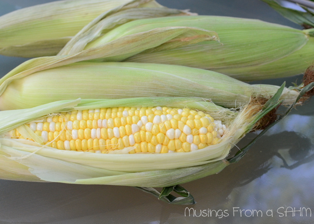 corn cob, fresh corn