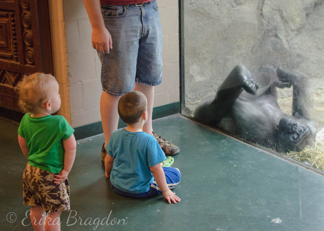 children looking at gorilla behind glass at zoo