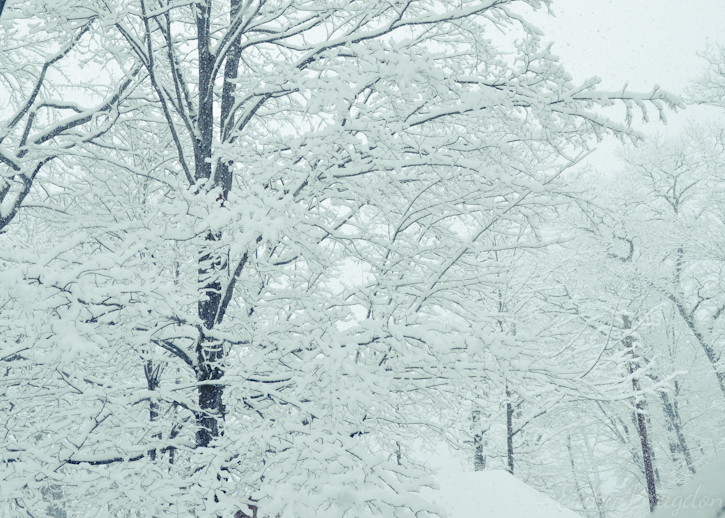 pretty snow snowy tree