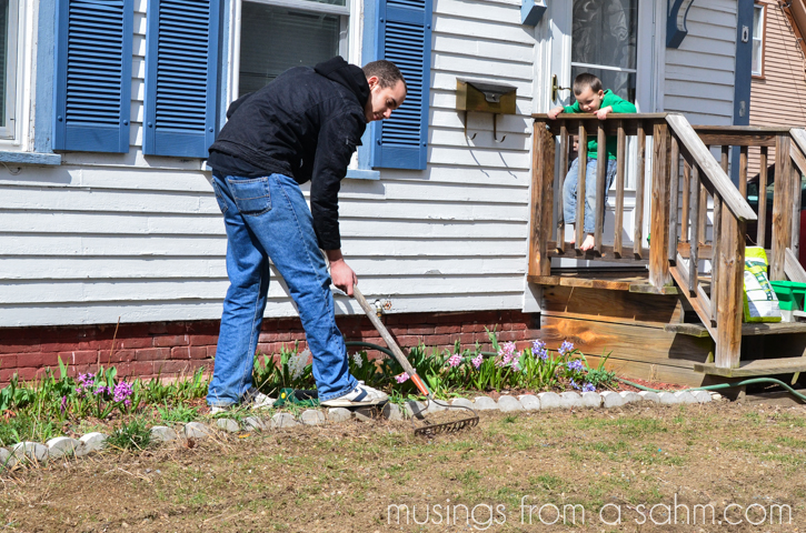 raking grass seed w child