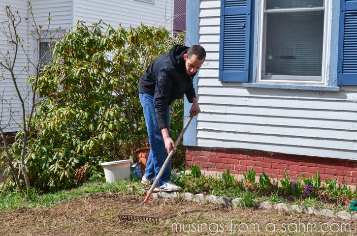 raking grass seed