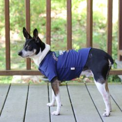 Summer Fun with PetSmart Tommy Bahama Pet Products {Giveaway}