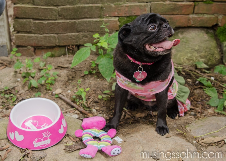 Abby Petsmart Dog-2