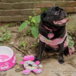 Summertime with Abby & PetSmart