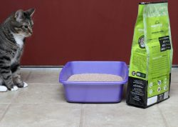 World's Best Cat Litter Advanced Natural Series: A Scoop Above the Rest