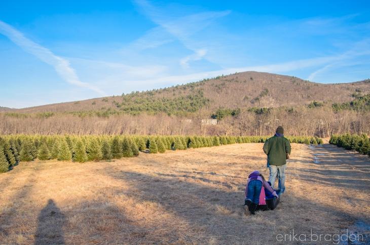 1311_Christmas Tree Farm_003