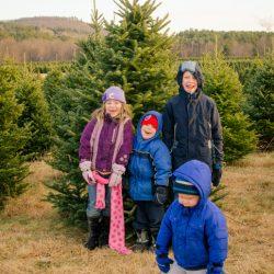 Choosing Our Tree from the Christmas Tree Farm