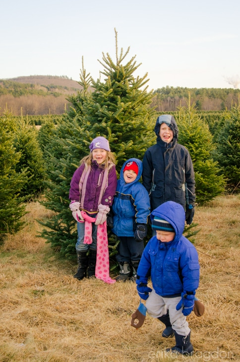 1311_Christmas Tree Farm_005