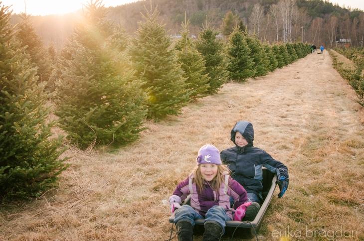 1311_Christmas Tree Farm_010