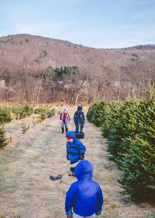 1311_Christmas Tree Farm_011