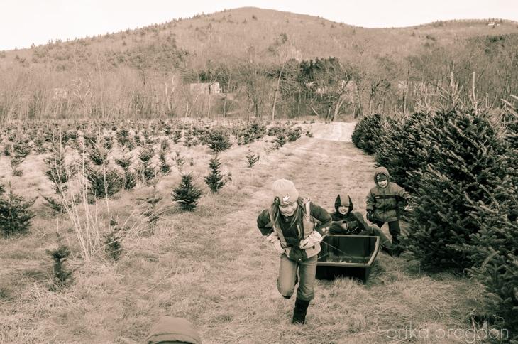 1311_Christmas Tree Farm_014