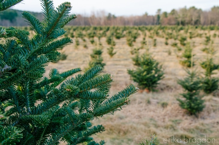 1311_Christmas Tree Farm_015