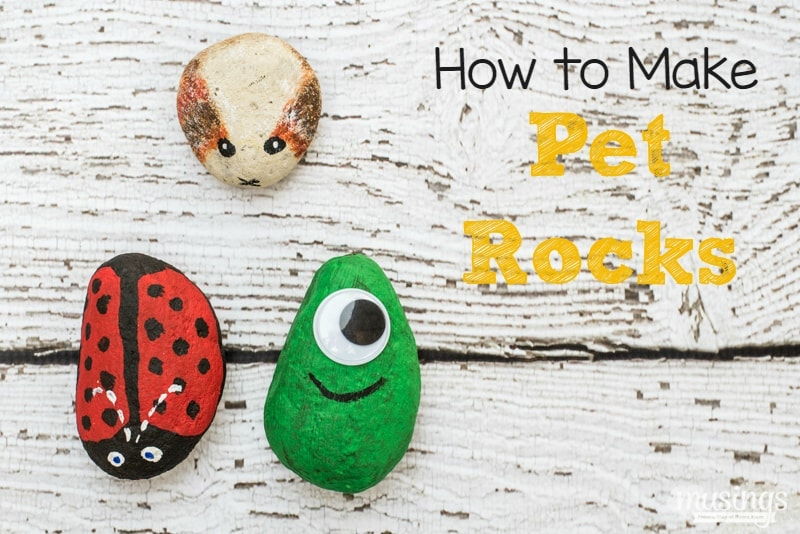 how to get a pet rock