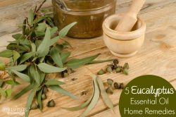 5 Eucalyptus Essential Oil Natural Remedies