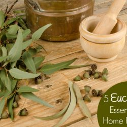 5 Eucalyptus Essential Oil Natural Remedies