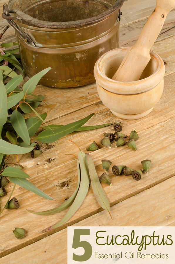 Treat common ailments with this powerful essential oil - Eucalyptus. Here's 5 simple eucalyptus home remedy uses for the whole family.