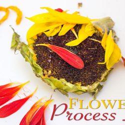 Sunflower Process Art