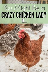 20+ Reasons You Might Be a Crazy Chicken Lady