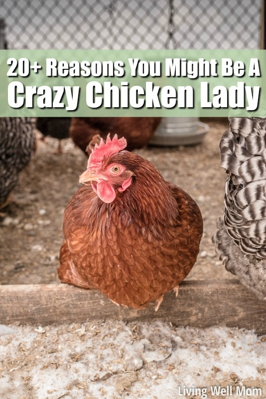 Love chickens? Here's 25+ reasons why you might have joined the crazy chicken lady club!