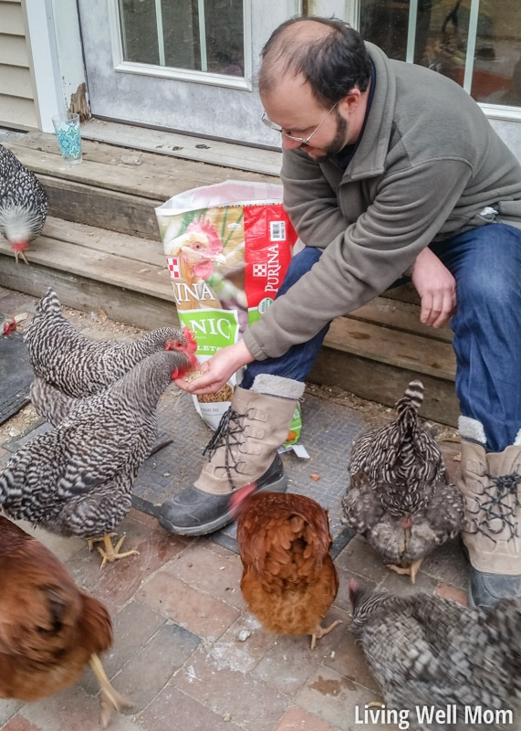 Thinking about getting chickens? From fresh eggs to fewer bugs, there's some amazing benefits to raising poultry; here's a few simple things to remember as you get started.