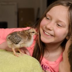 5 Reasons Raising Chickens is Perfect for Families