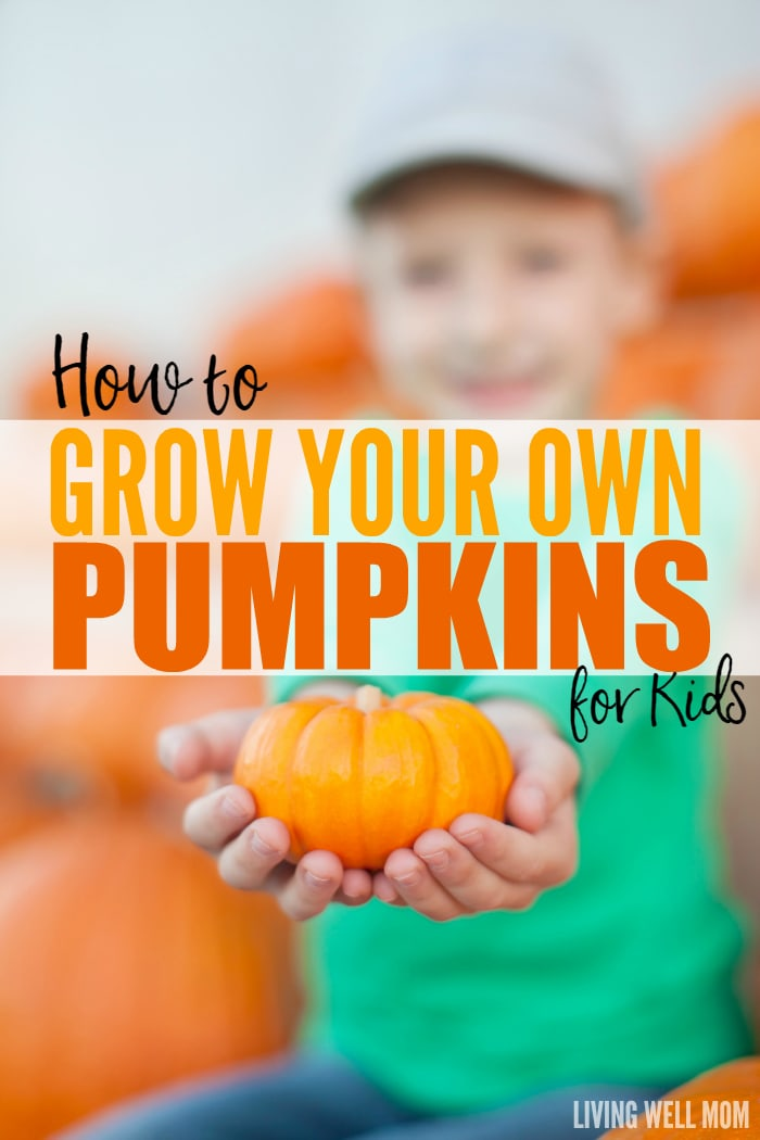Thinking about getting your little ones involved with the garden? Here's why pumpkins are a great starter plant for kids and how to grow them!