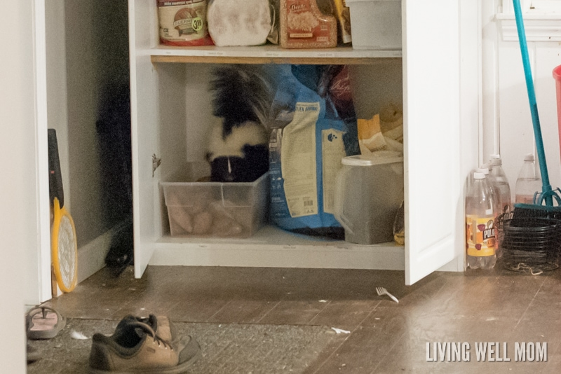 "When life hands you a skunk, what do you? Read our ""Skunk Story"" - a true story so crazy you almost won't believe it!"