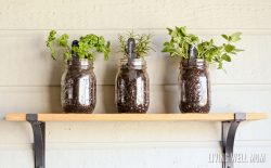 Easy Herb Planters for Kids