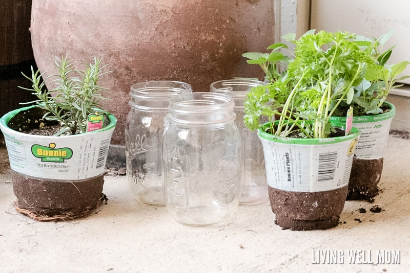 How to make easy herb planters for kids - welcome spring and teach kids how to do simple gardening with these easy mason jar herb planters! They make great gifts too!