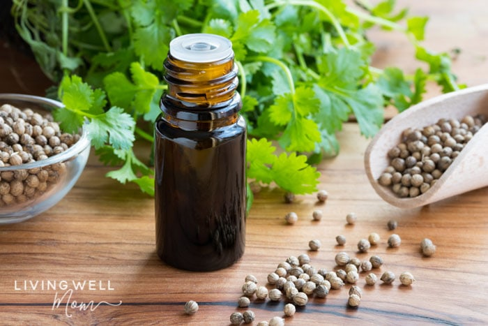 coriander essential oil for bug bites