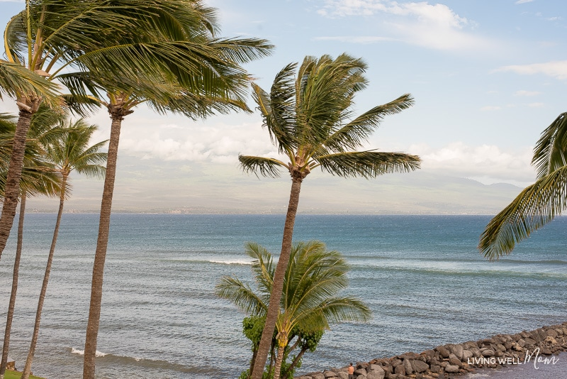 maui palm trees and the pacific ocean