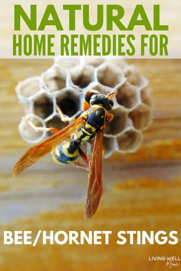 natural home remedies for hornet and bee stings