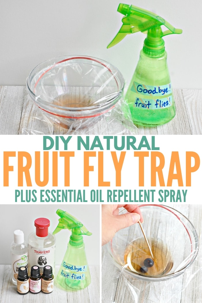 DIY Natural Fruit Fly Trap Essential Oil Repellent Spray