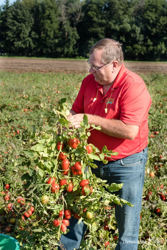 A man standing in front of a tomato plant