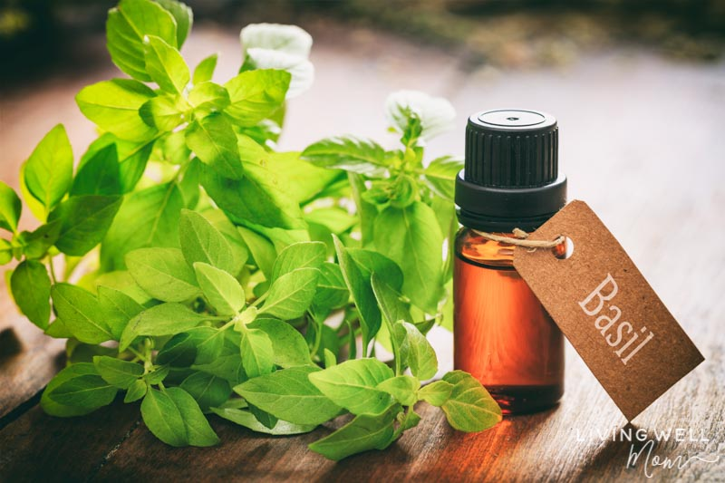 basil essential oil for seasonal allergies