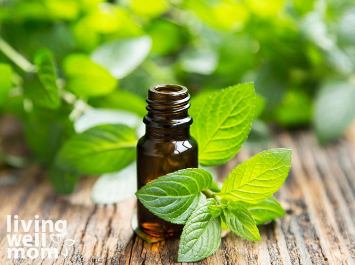 peppermint leaves and essential oil bottle