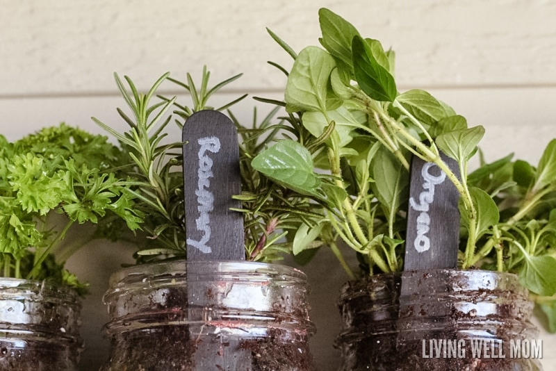 Three herb planters filled with plants and popsicle stick garden markers made by kids.