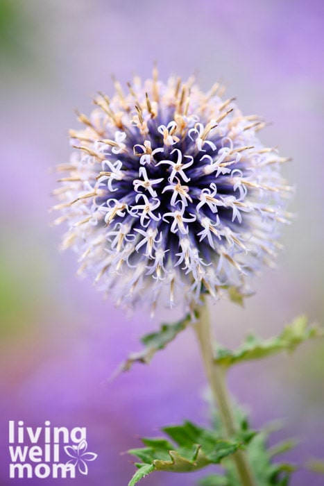 Purple flower with blurred background